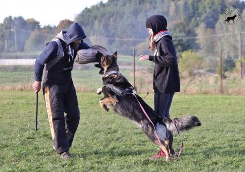 Szkolenie sportowe