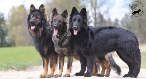 Nasze psy razem
